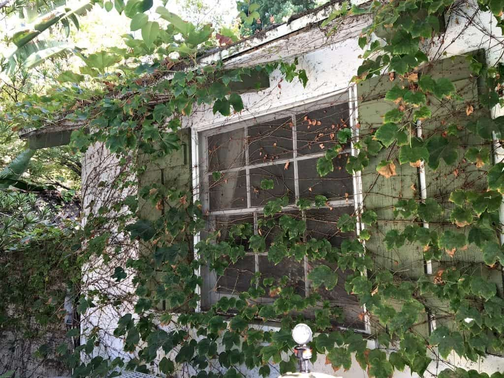 Vines on House